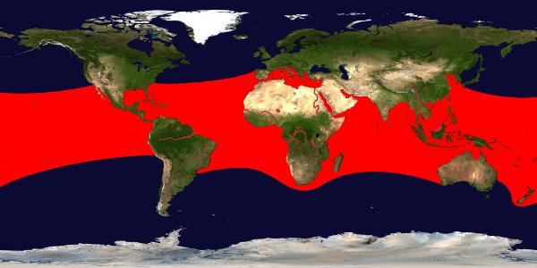 Die roten Flächen zeigen in etwa das Verbreitungsgebiet der Kugelfische